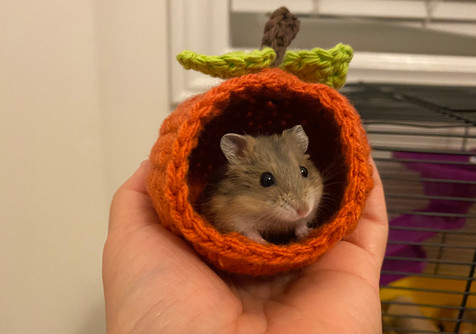 Crochet Pumpkin House for Hamster