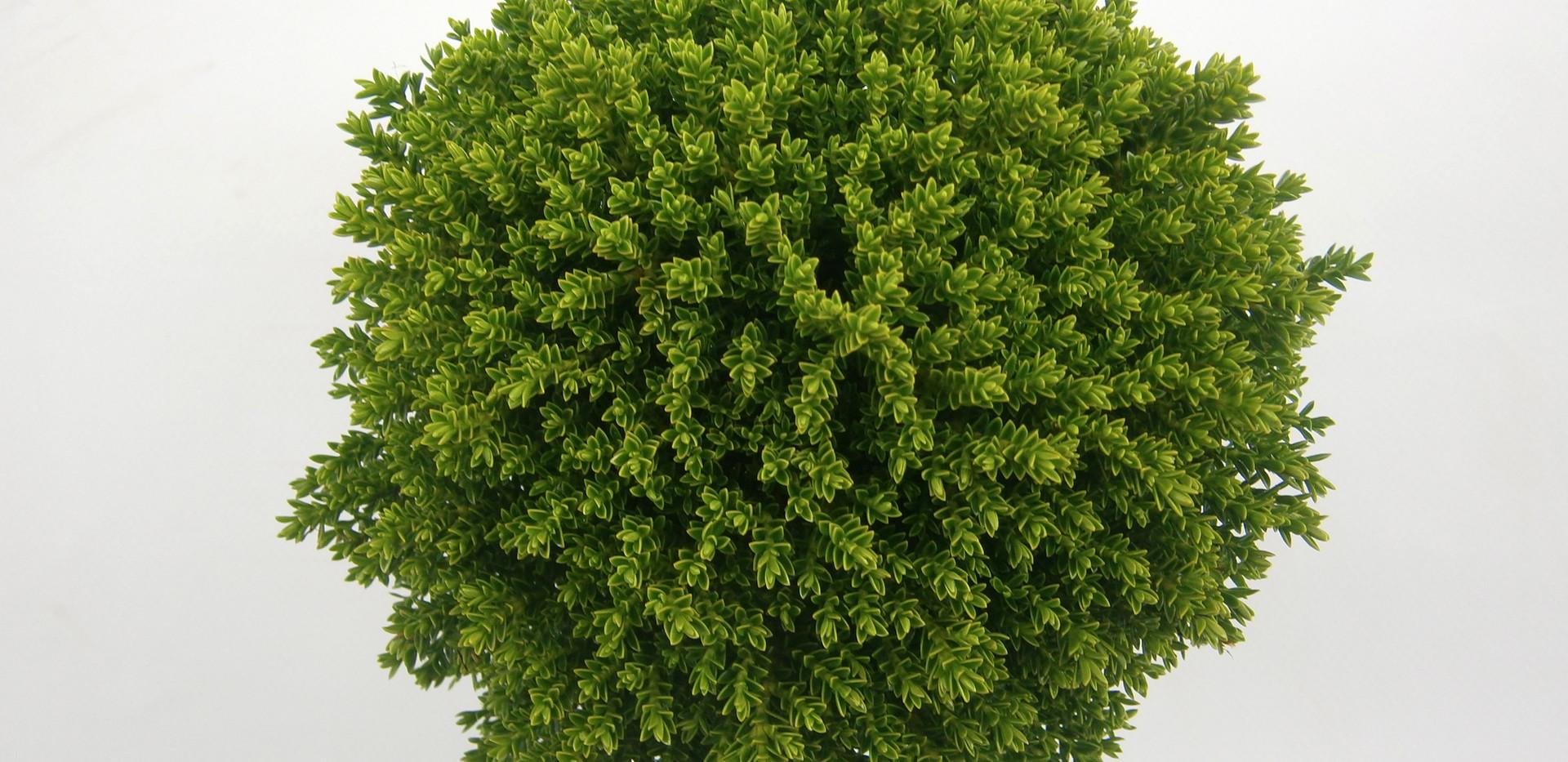 Hebe Green Globe 11 cm top.jpg