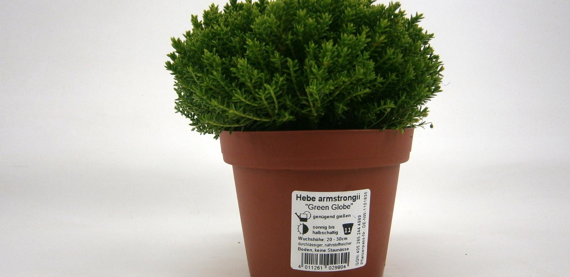 Hebe Green Globe 11 cm.jpg