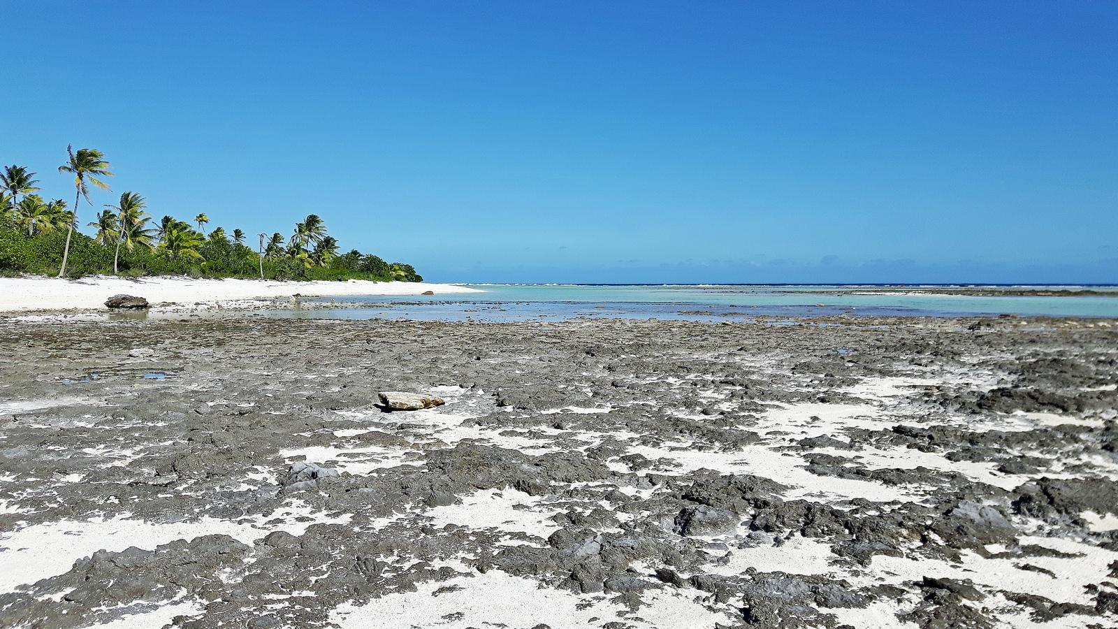 Palmerston bassa marea