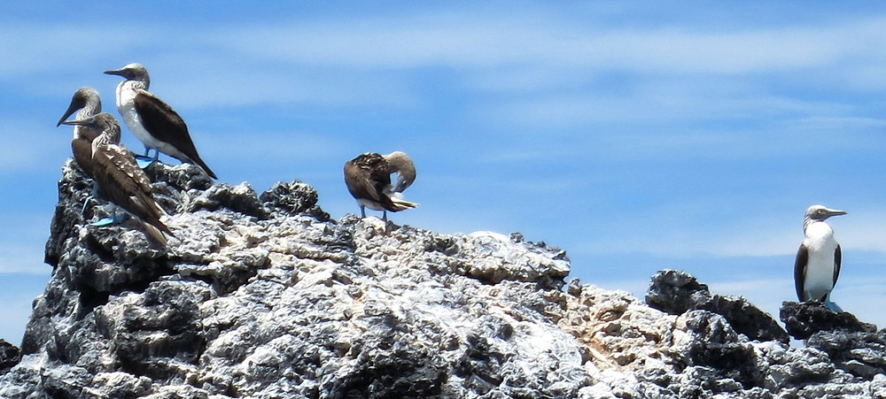 Galapagos 2015 104.JPG