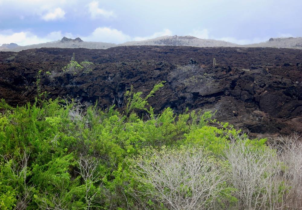 Galapagos 2015 071.JPG