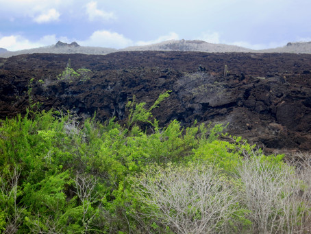 Galapagos Fine