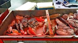 Tonga Vava'u pesci esotici in vendita al mercto di Neiafu