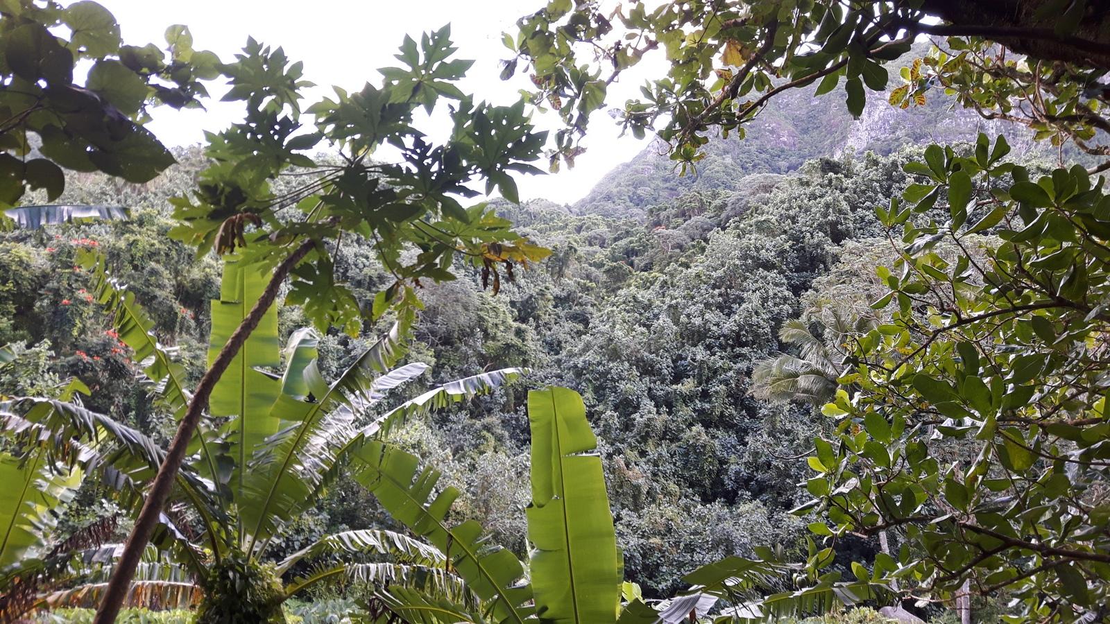 Rarotonga foresta tropicale