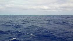 Beveridge_Reef_là_c'è_un_atollo