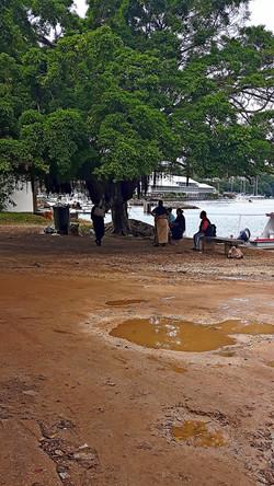 Tonga Vava'u quattro chiacchere sotto un ficus