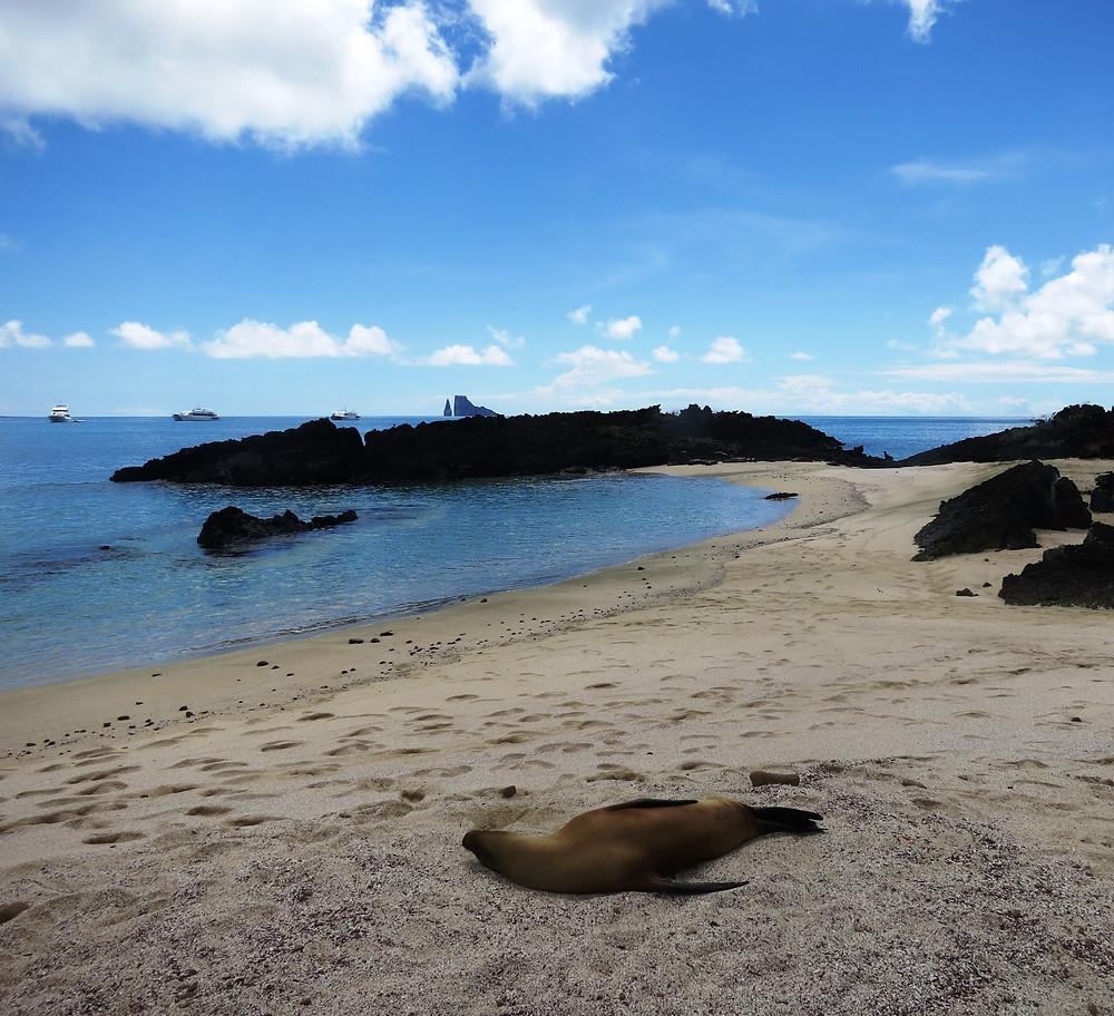 Galapagos 2015 087.JPG