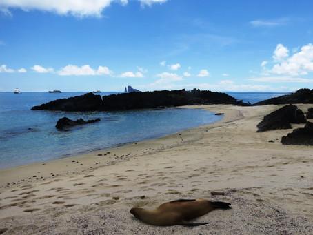 Galapagos Parte I