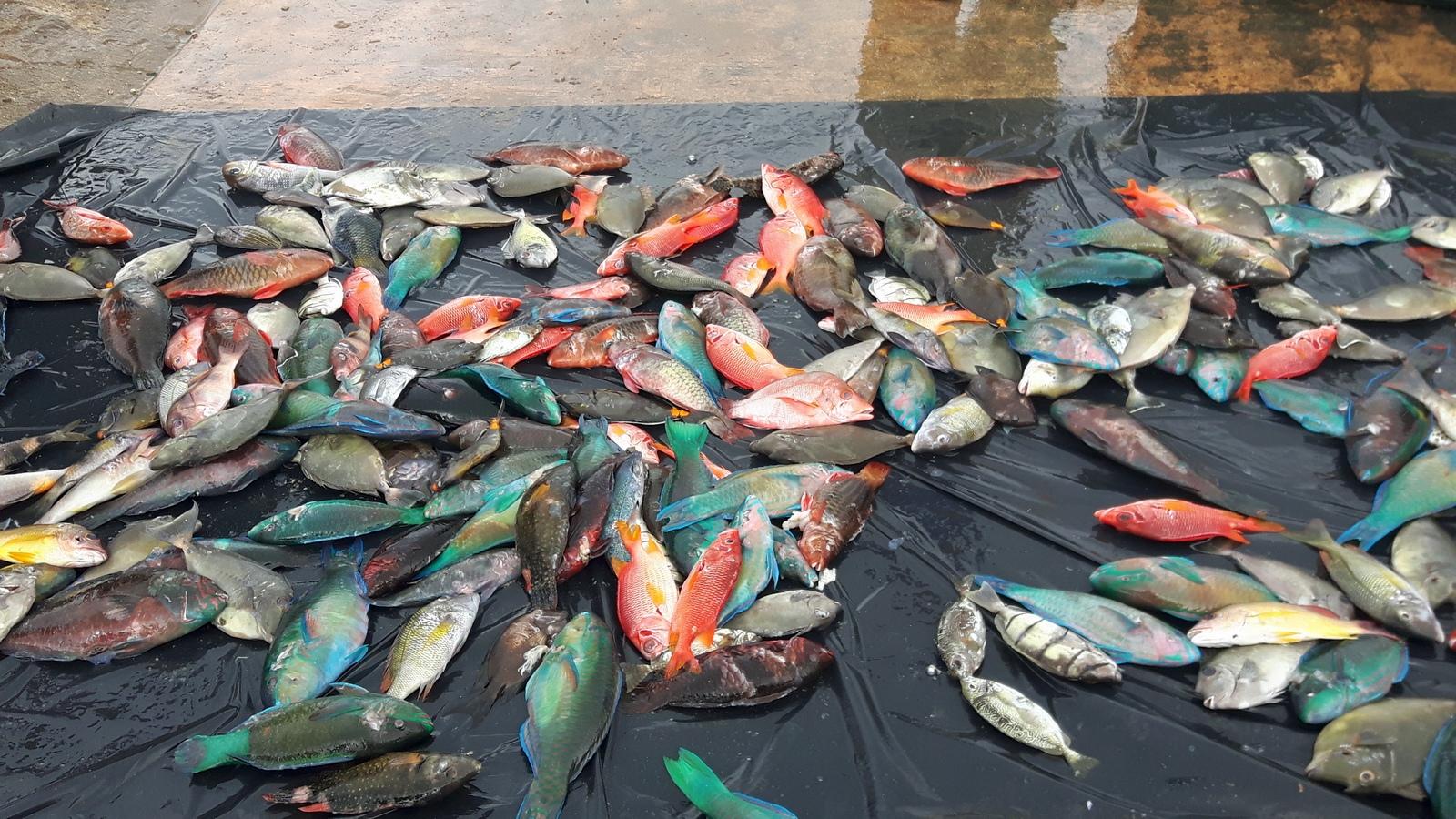 Vava'u i coloratissimi pesci al emrcato