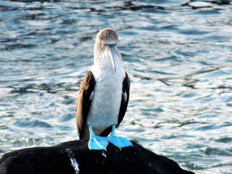 Viaggio senza tempo VIII - Verso le Galapagos