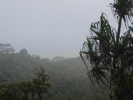 Acquazzone tropicale