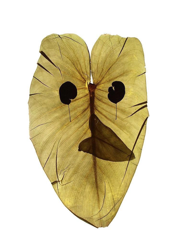 herbier masque 2 petit.jpg