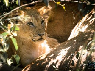 Kenya Part 1: Maasai Mara