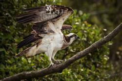 India Sundarbans-07583