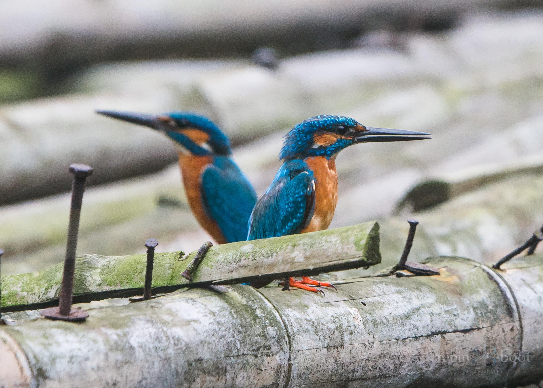 India Sundarbans-07796