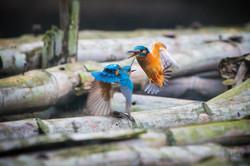 India Sundarbans-07821