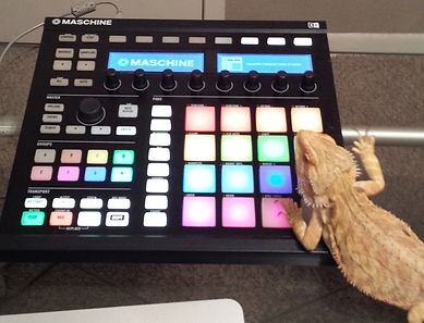 Baby Girl Bearded Dragon Working on a Hip Hop Mixtapes beat in the Studio