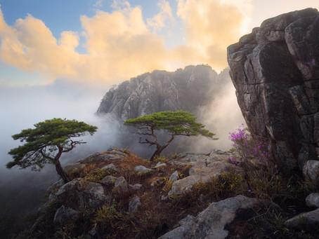 Shooting Korea's Majestic Mountain Pine Trees