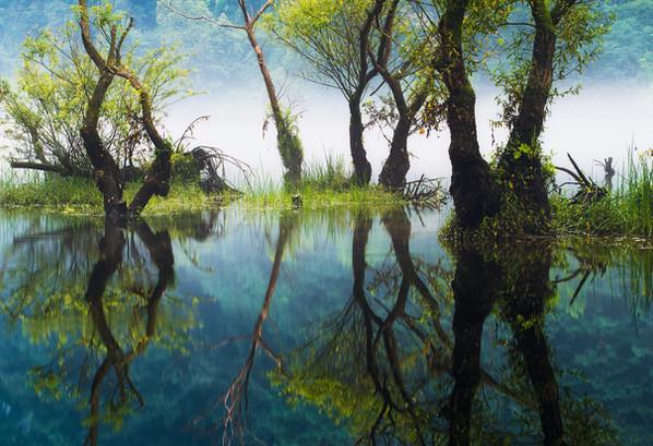A Summer Reflection