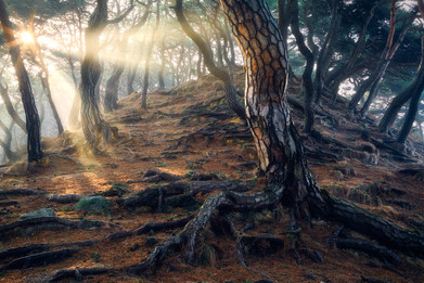 Roots of Time