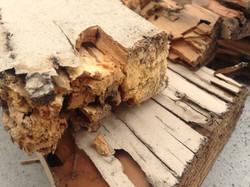 Termite and Fungus damage