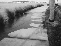 environment-king-tide-flooding-charleston-3