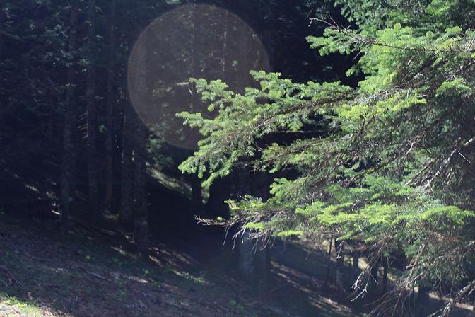 Canon EOS 1300D1412.JPG
