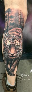 tigrepierna1.JPG
