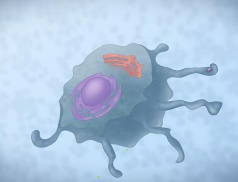 Estimulação dos Macrófagos