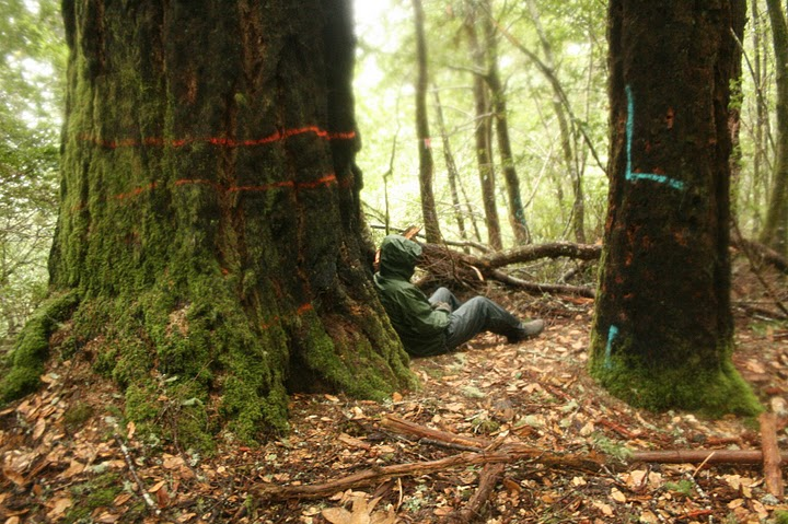 Trees marked and tagged