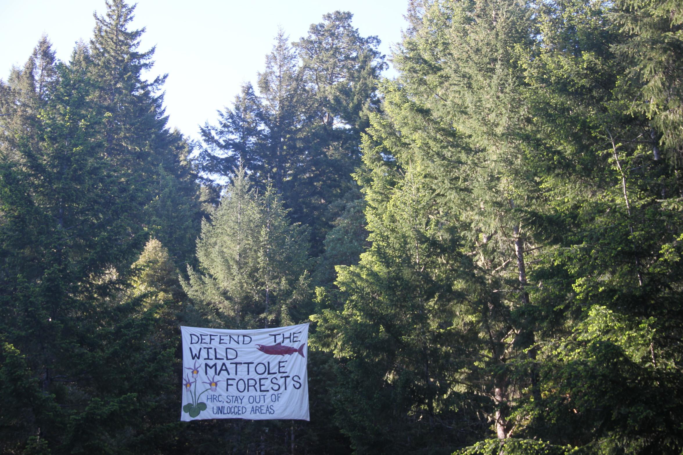 Mattole Activist Banner
