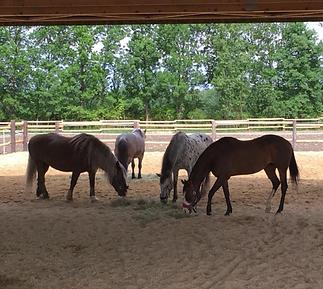 Pferdestärken Kinderstärken Therapiezentrum Gramatneusiedl