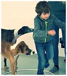 Kinder stärken Gramatneusiedl Ergotherapie tiergestützte Therapie