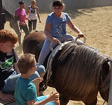 Kinder Stärken Pferde Stärken Therapie Pferd Flaxi