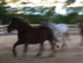 Kinder STärken, Pferde Stärken, Therapiezentrum Gramatneusiedl, Ergotherapie, Hippotherapie, Physiotherapie, Sprachtherapie, Autismus und mehr