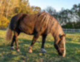 Therapie am Pferd Gramatneusiedl, Kinder Stärken, Pferde Stärken, Flaxi, Autismus, ADS, Wahrnehmungsförderung, Ergotherapie, Physiotherapie, Psychologie, Andrea Keglovits-Ackerer