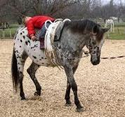 Kinder Stärken Pferde Stärken Therapie am Pferd