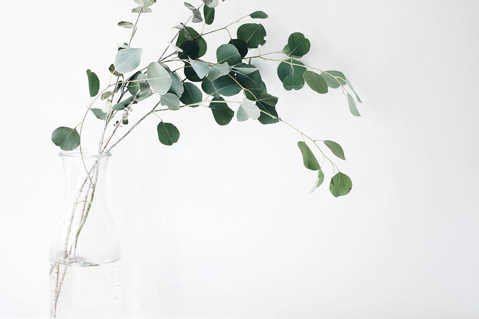 Marie Kondo Methode_Pflanze