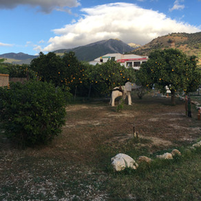 Alcaucín, ES - Jardín de Pajaros