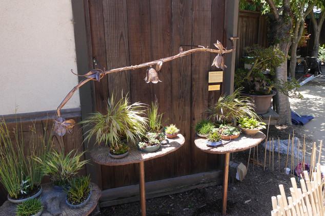 Copper Vines For Bonsai Garden