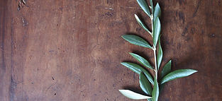 olive-2-1373814-1280x960.jpg