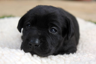 lucy pet carer puppy care.jpg