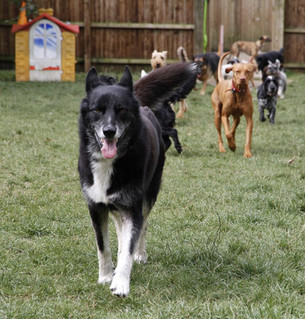 prevent boredom and anxiety in dogs lucy