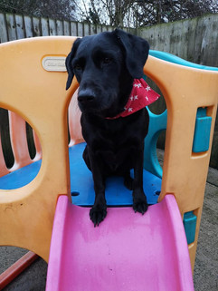 lucy pet carer doggy day care creche and