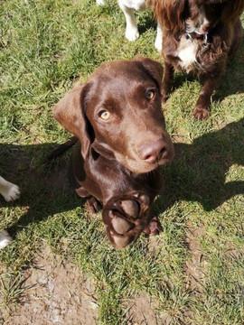 puppy-boarding-wiltshire-1.jpg