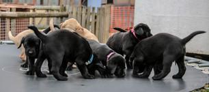 puppy-sitters-3.jpg