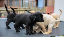 puppy-day-care1.jpg