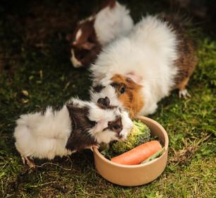 pet-sitters-3.jpg