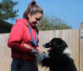 lucy pet carer qualified dog specialists